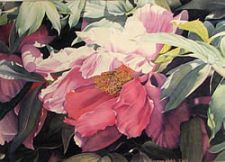 Honorable Mention - Peony #1 by Suzanne Welch
